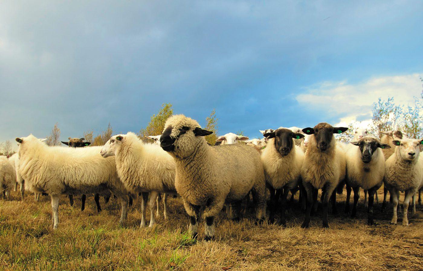 Do You Teach the Fear of God to Your Flock?