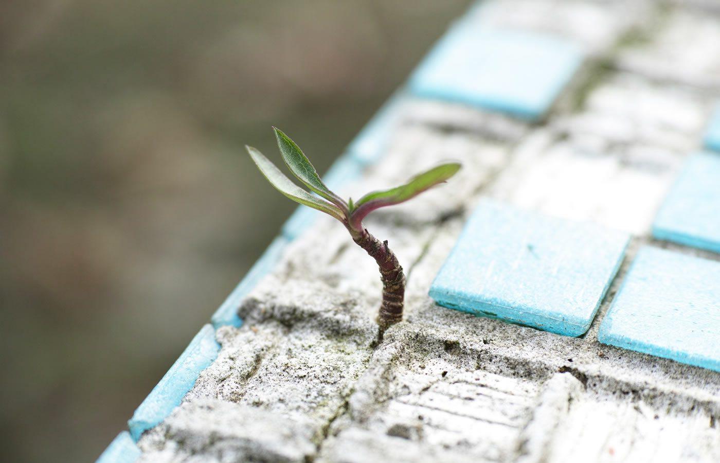 Regaining Hope