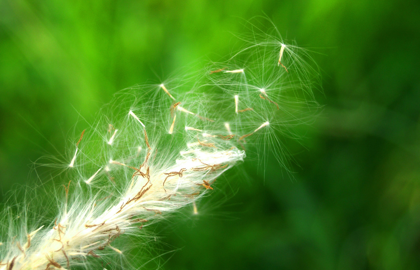 Practicing Gentleness in a World of Hostility