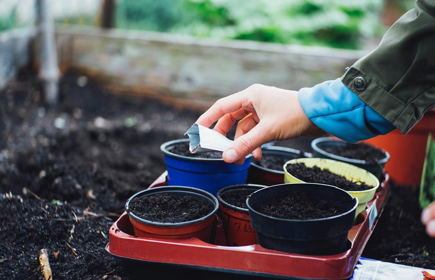 Toward Planting Seeds